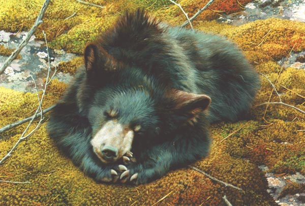 Reproductions of Carl Brenders Paintings Bearly Asleep