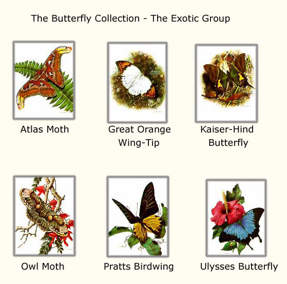 Reproductions of Carl Brenders paintings Butterfly Collection 1