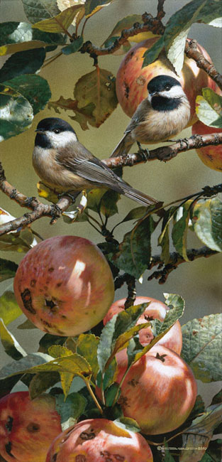 Reproductions of Carl Brenders paintings Chickadee in Apple Tre