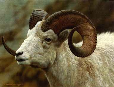 Reproductions of Carl Brenders Paintings Dall Sheep Portrait
