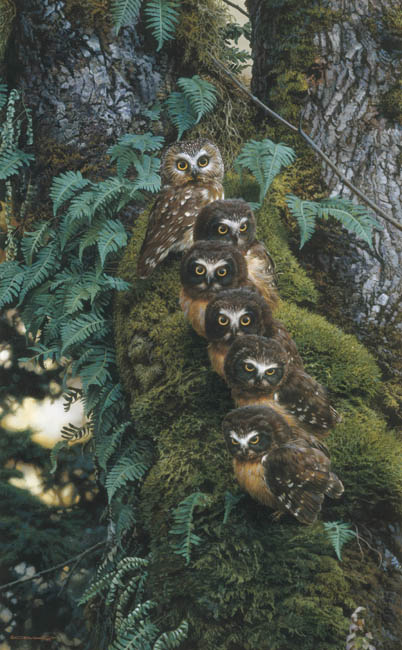 Reproductions of Carl Brenders paintings Family Tree,The-Owl
