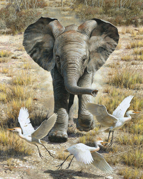Reproductions of Carl Brenders paintings Flushing Egrets-Elepha