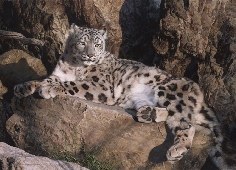 Reproductions of Carl Brenders Paintings Ghose Cat-Snow Leopard