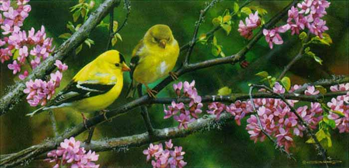 Reproductions of Carl Brenders Paintings Gleam of Gold-Goldfinch
