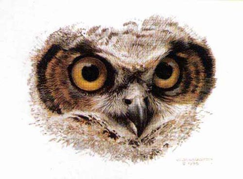 Reproductions of Carl Brenders Paintings Great Horned Owl Study