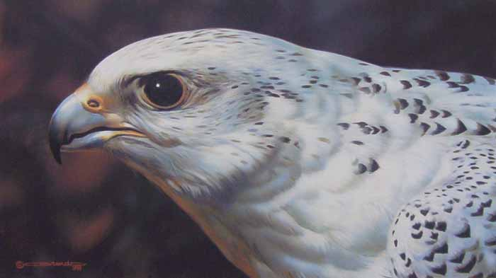 Reproductions of Carl Brenders Paintings Gyrfalcon Portrait